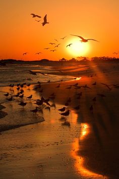 crescentmoon06:   Sunset birding by Nathalie... - crescentmoon