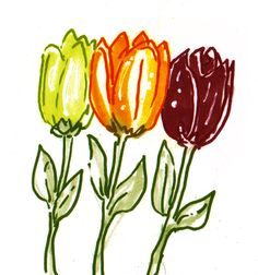 spring-time flowers, tulips, drawing, pic, sketch