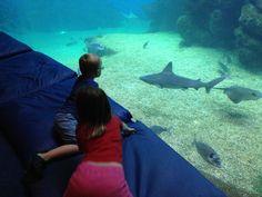 Barnen spanar in en haj (Palma Aquarium)