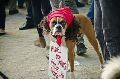 Antoine Dogson.  ... OMG Best dog costume every! (the other 99 are pretty funny too)
