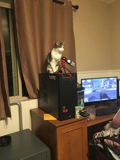 Amethyst my 17 year old gargoyle surveying her kingdom. http://ift.tt/2DXVwpT