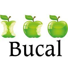 Secció Bucal