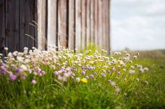 Events and Things To Do in Cornwall (Spring 2016)