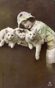 Edwardian girl with three cats, ca. 1914. (real photo postcard)  Same girl and cats as photo below.