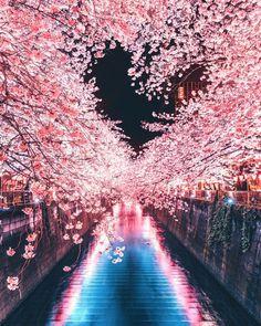桜満開のこの季節。夜桜の名所でマジックが起きました。