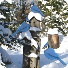 Blue Jays in Winter. Set of six notecards and envelopes $14.99 CDN. Free shipping within Canada and continental U.S.A.