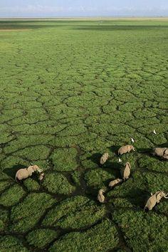 Africa. Okavango Delta, Botswana