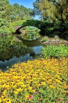 River bank  # daisies # summer