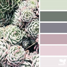 today's inspiration image for { succulent hues } is by @amermyla ... thank you, Myla, for another fantastic #SeedsColor image share!