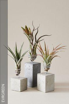 Luftpflanzen auf Betonsockeln