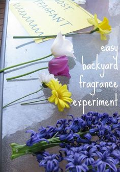 playing with senses in one of the coolest possible ways. . . backyard fragrance experiment!  --> MUST do this again soon!