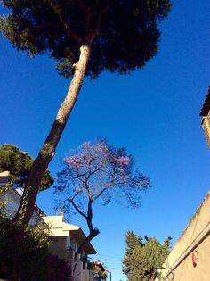 Casa con árbol Málaga