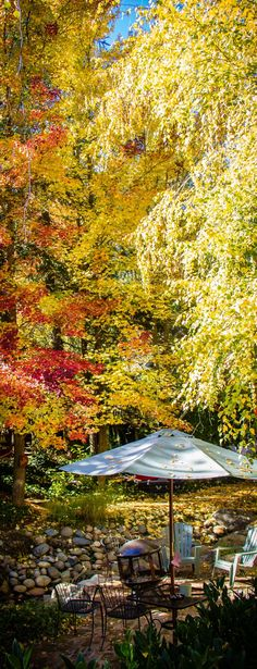 Fall colors in Nevada City, sit on the patio at the Outside Inn and enjoy the folliage. Nevada City California, Northern California, Grass Valley, Outdoor Settings, Lodges, Places To Go, Patio, Vacation, Landscape