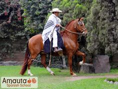 A nice, strong looking gelding. The roched mane signifies that it is a gelding within the Peruvian Paso horse world