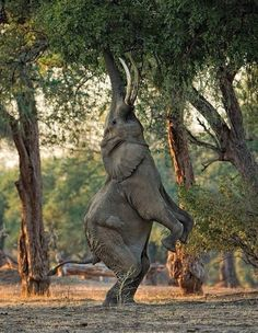 """Breathe on Twitter: """"A gorgeous picture of an elephant reaching out for the trees. https://t.co/HCj6L7qg83"""""""