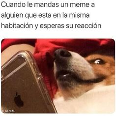 Love Memes Funny, Funny Spanish Memes, True Memes, Stupid Funny Memes, Funny Relatable Memes, Best Memes, Dankest Memes, Hilarious Quotes, Girl Memes
