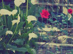 Nature...my edit