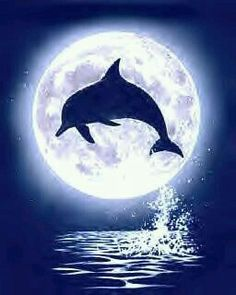 Moon Dolphin Photo: This Photo was uploaded by Find other Moon Dolphin pictures and photos or upload your own with Photobucket free ima. Dolphin Drawing, Dolphin Painting, Dolphin Art, Dolphin Images, Dolphin Photos, Dolphins Tattoo, Silhouette Art, Moon Art, Sea Creatures