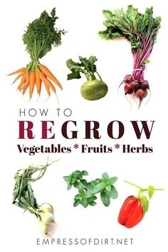 How to regrow vegetables fruits and herbs from kitchen scraps. A fun waste-free way to get free plants. How to regrow vegetables fruits and herbs from kitchen scraps. A fun waste-free way to get free plants. Regrow Vegetables, Organic Vegetables, Growing Veggies, Growing Herbs, Gardening For Beginners, Gardening Tips, Kitchen Gardening, Flower Gardening, Gardening Services