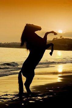 Un cheval qui se cabre au coucher du soleil, et c'est trop beau!!!!!!