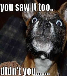 Funny-Dog-Pictures-with-Caption-15