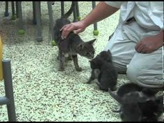 Itty Bitty Kitties Reunited with Abused Mama Cat - YouTube
