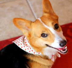 """Valentine's Day tie-on bandana with sweet red hearts on a white background 16"""" neck max by PuppyPawzBoutique on Etsy"""