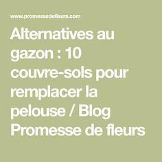 Alternatives au gazon : 10 couvre-sols pour remplacer la pelouse / Blog Promesse de fleurs
