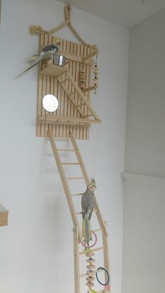 Spielzeug p Nymphensittich Spielplatz + Treppe Vogel Charme -, You are in the right place about Bird Budgie Toys, Parakeet Toys, Diy Cockatiel Toys, Cockatiel Cage, Diy Parrot Toys, Diy Bird Toys, Diy Toys, Bird Cage Design, Diy Bird Cage