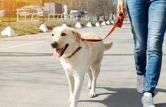 Consejos para hacer el camino de Santiago con perro