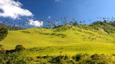Valle Del Cocora - Quindio, Colombia