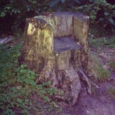tree stump throne - I was at a campground that had one of these