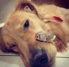 perro y pajaritos mejores amigos