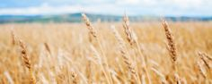 The Problem with Grains