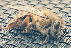 Soo a beutiful bee and people kill them!!!!