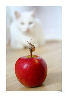 cat. watching a snail. by kleinerklemmkeil.deviantart.com