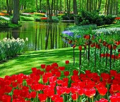 Estallido primaveral en Holanda