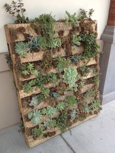 Wooden pallet, covered with wire and planted with succulents