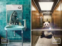 wildlife selfies campaign by silvio medeiros for national geographic - designboom | architecture