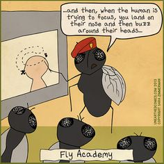 funny-internet-cartoon-about-annoying-house-flies