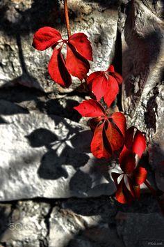 Couleur d'automne - null