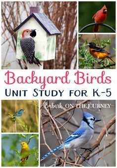 Kids will love studying the birds in their own backyards with this fun unit study! This unit includes videos, books, science experiments, and a printable unit study pack! The activities inside are perfect for kids in grades K-5! | embarkonthejourney.com