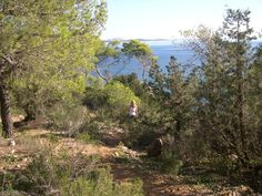 Through the trees on our way to Cala Llonga