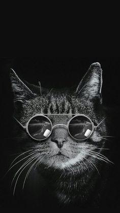 Wallpaper Gatos, Cat Pattern Wallpaper, Iphone Wallpaper Cat, Cute Cat Wallpaper, Animal Wallpaper, Galaxy Wallpaper, Desenio Posters, Animal Society, Most Beautiful Animals