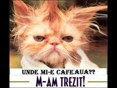 Buna dimineata - unde mi-e cafeaua?