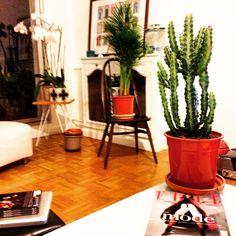 Interior cactus