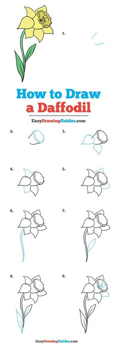 How to Draw a Daffodil &; Really Easy Drawing Tutorial How to Draw a Daffodil &; Really Easy Drawing Tutorial Josie Abreu rubbaduckee Drawing Tutorials Learn How to Draw a […] for beginners thoughts Easy Flower Drawings, Flower Drawing Tutorials, Drawing Tutorials For Beginners, Easy Drawings, Pencil Drawings, Beginner Drawing, Flower Step By Step, Step By Step Drawing, How To Draw Flowers Step By Step