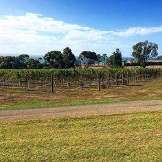 A vineyard and the sea perfect combo! Terindah Estate Winery Bellarine Peninsula. #bellarine #bellarinepeninsula #terindahestate #australia by suitcasesandhighheels http://ift.tt/1JO3Y6G