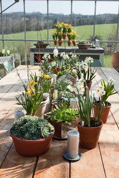 Sarah Raven Perch Hill Farm - potting spring bulbs