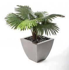 Artificial 2ft Windmill Fan Palm Tree (P051W) from Artplants.co.uk #palm #palmtree #artificialtree #artificialplant #houseplant